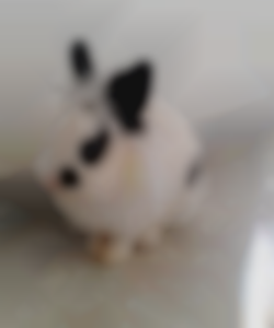 my_blur